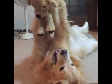 Stuffed Animal Like Your Dog