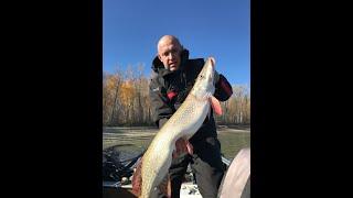 ЭТО ЛУЧШАЯ РЫБАЛКА Трофейная рыбалка на спиннинг Осенний джиг на реке