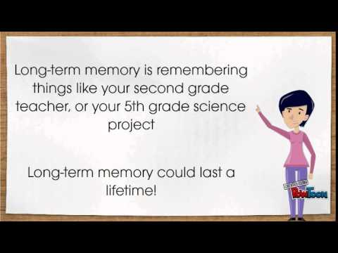 Short-Term, Long-Term, and Working Memory