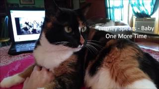 Callie the Cat Reacts to 90s Music Videos