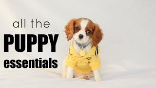 PUPPY ESSENTIALS ULTIMATE CHECKLIST // Everything you need to buy for a puppy
