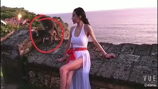 Shooting ke दाैरान monkey ne kiya sex