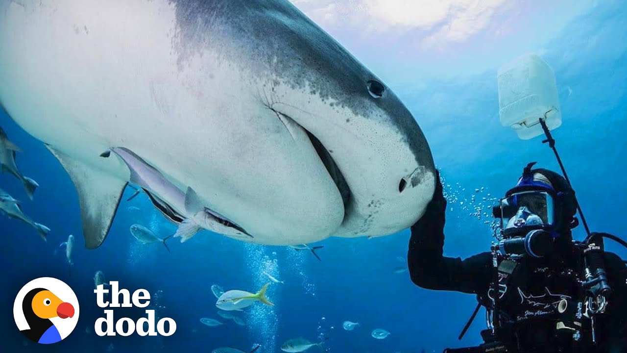 Guy And Wild Shark Have Been Best Friends For Decades| The Dodo Wild Hearts