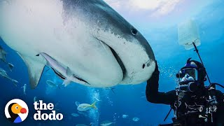 Guy And Wild Shark Have Been Best Friends For Decades | The Dodo Wild Hearts