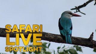 World Migratory Bird Day 2018 thumbnail