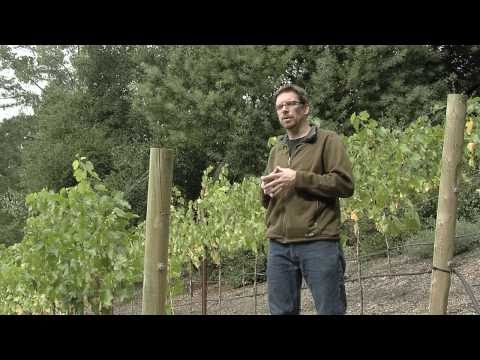 Hillside Landscaping Ideas - Home Vineyard