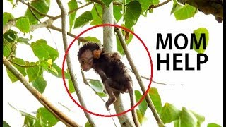 DEEP SCARE FALL || Worried Baby Charlee | Mom Less Care & Let Charlee Lonely On Branch Tree
