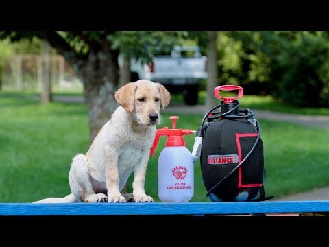 Professional Dog Training - Cleanliness and Hygiene Tips
