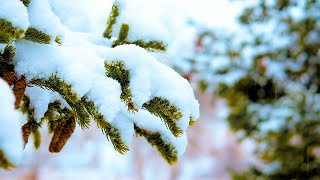 Calming Piano Music with Soft Falling Snow Sounds: Sleep Music, Beautiful Music, Stress Relief