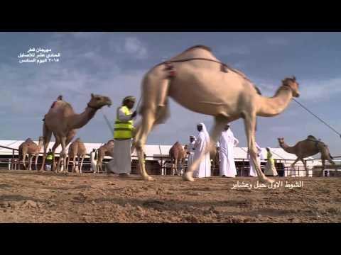 مهرجان قطر الحادي عشر للاصايل 2015 اليوم السادس