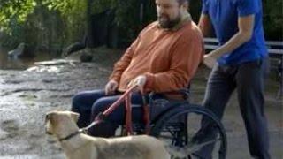 Video Sonnet 60 - Prospect Park Dog Run, Brooklyn download MP3, 3GP, MP4, WEBM, AVI, FLV November 2017