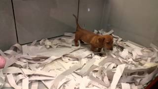Puppy's At Pj Pets West Edmonton Mall