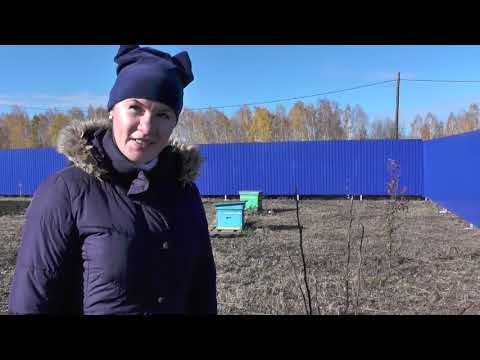 Подготовка плодовых деревьев к зиме, яблони, груши, сливы