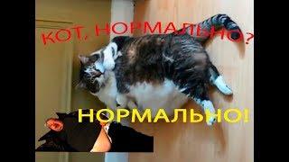 Приколы с котами #4 Funny cats. Улыбчивый кот 0+