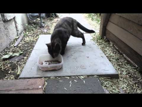 Stray Cat With Kittens Found