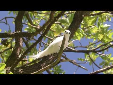 French Polynesia Rangiroa Atoll Bird Island Ennio 2015