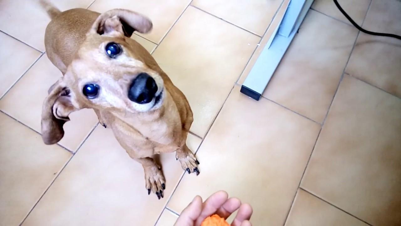 JUNIOR - Pegando a bolinha, cheio de energia - Cachorro Vegano - 08-03-2018