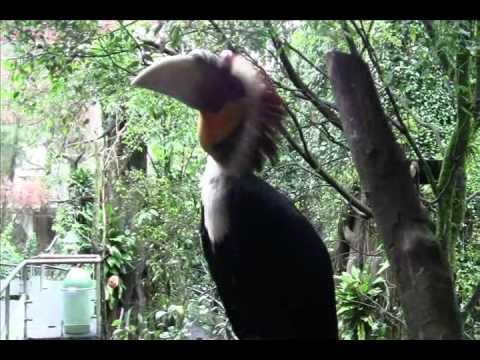 Taman Safari Indonesia (Bird Park) - Wisata Bogor - West Java Travel Guide - Indonesia Travel Guide