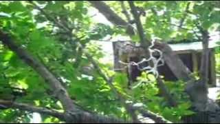 видео Сигнализатор роения пчёл