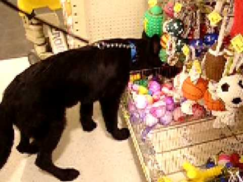 Pruett Picks Out a Toy at PetSmart