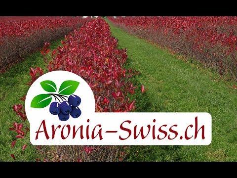 Aronia Swiss