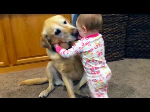 Adorable Babies Playing With Dogs and Cats - Funny Babies Co