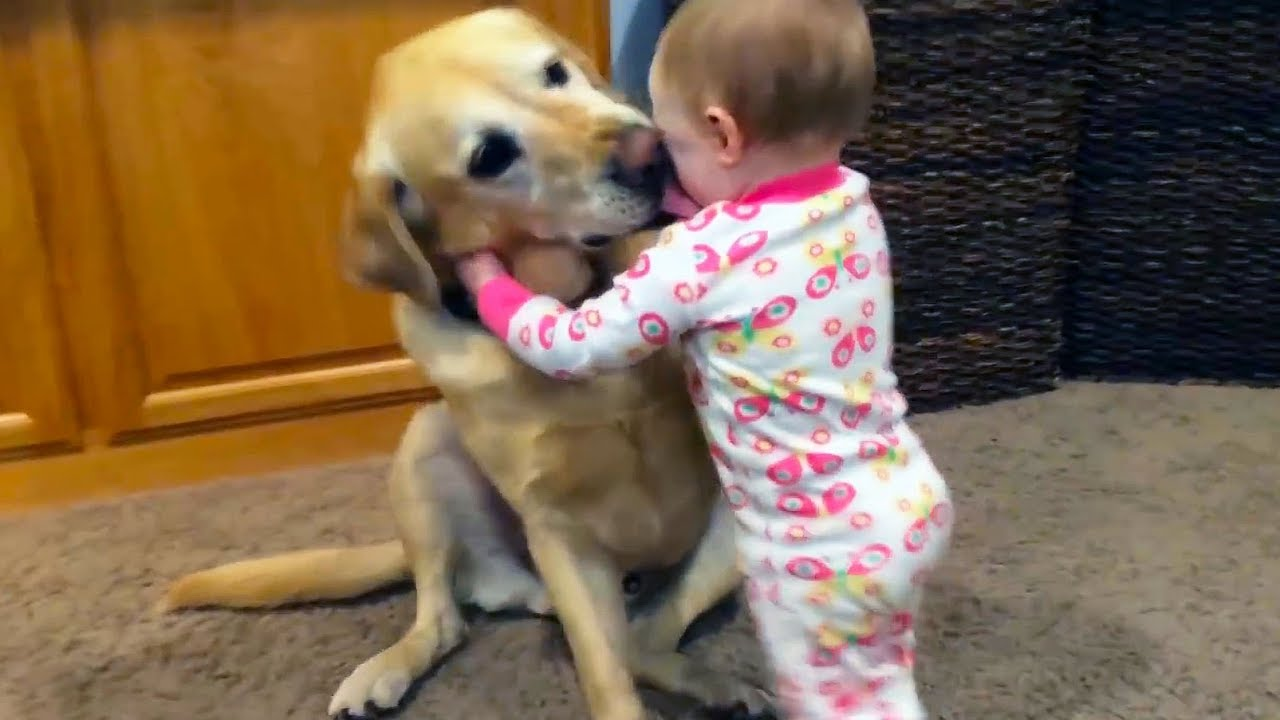 Adorable Babies Playing With Dogs And Cats Funny Compilation 2018