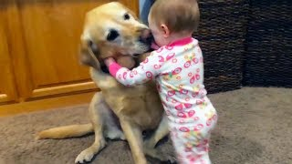 baby and dog are best friends