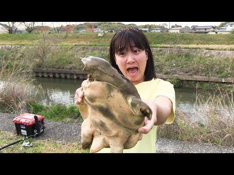 ぶらっと川にスッポン釣りに行ったらスゴイ釣果に!!!