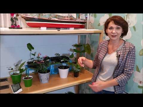 Своя теплица для растений. Мини-теплица в квартире для моих антуриумов и других цветов.