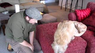 The Cairn Terrier Chronicles - Picking Up Pavlov From Vacation
