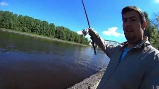 Рыбалка с поплавком на канале. Долгопрудный 27.05.17