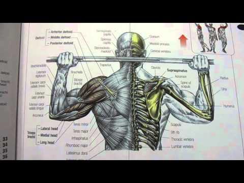 تحميل كتاب strength training anatomy النسخة الثانية المترجمة للعربية