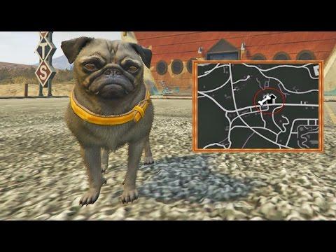 Visitando la Tienda de mascotas en GTA 5! - GTA V Mod (Grand Theft Auto 5)