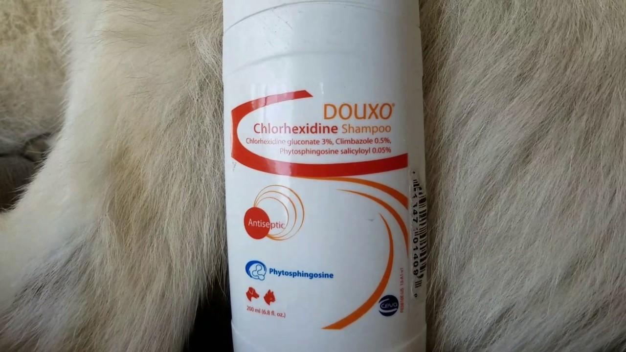 douxo klorhexidin schampo