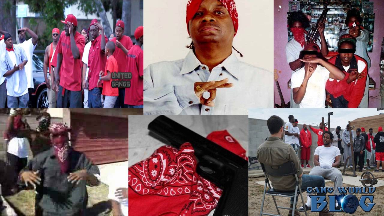 """bloods and the crips use of Crips also wear blue bandanas and british knights sport shoes (using the company moniker bk, which the crips use as a backronym meaning """"blood killas."""