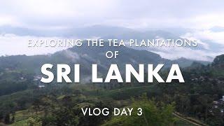 Exploring Madulkelle and Tea Plantations of Sri Lanka Vlog 16