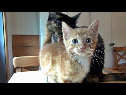 The Joys Of Fostering Rescued Cats & Kittens - Part 1