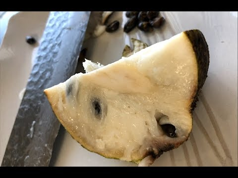Does This Fruit Cure Cancer | SOURSOP