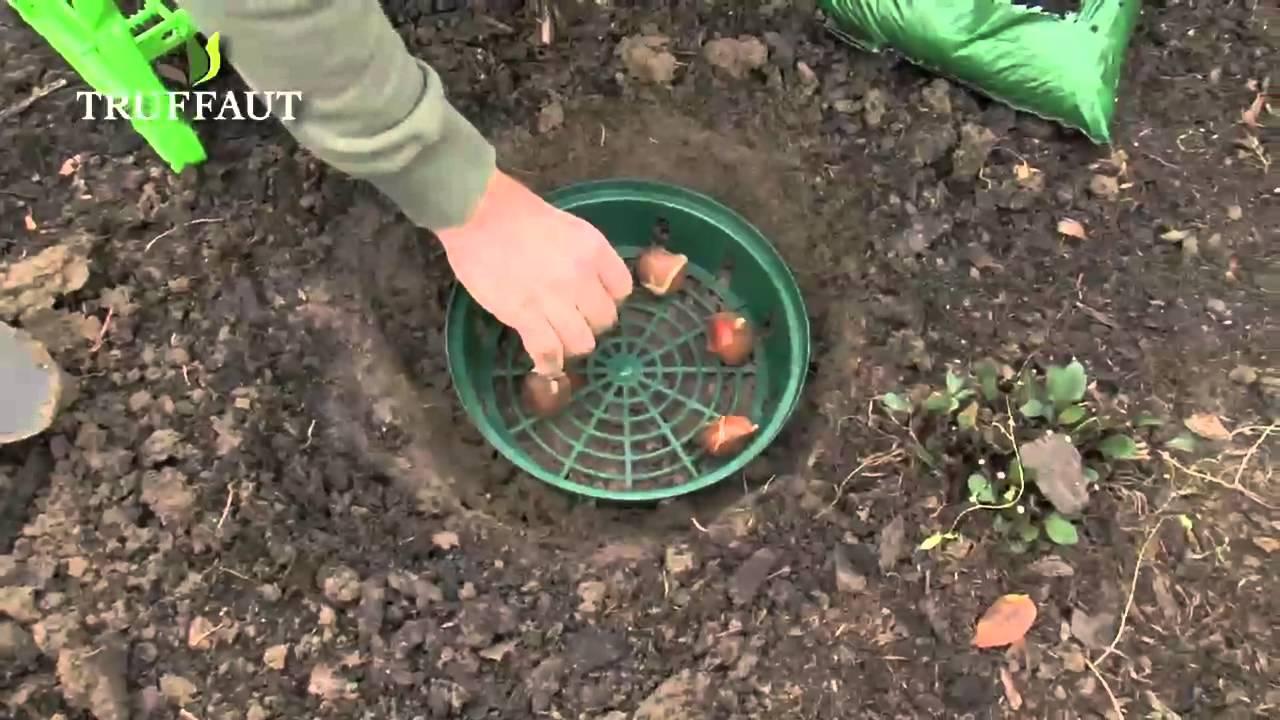 les outils pour planter des bulbes en pleine terre jardinerie truffaut tv youtube. Black Bedroom Furniture Sets. Home Design Ideas