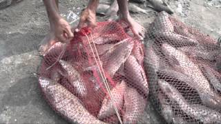 Fishing In Pakistan By Khan Group With Malik Tahir 2
