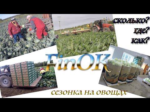 Сезонная робота в Финляндии. Овощи. Сколько можно заработать.