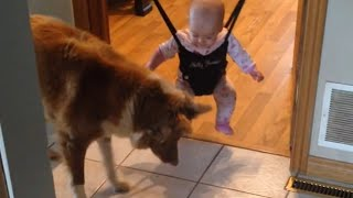 Dog Teaches Baby to Jump | Shadow Attack