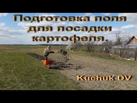 Вопрос: Как узнать весной, что почва созрела для посадки картофеля?