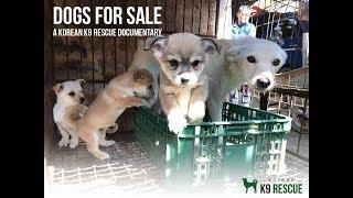Korean K9 Rescue  Dogs For Sale   vF
