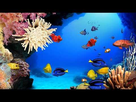 Aqua Real 2 - Ocean 4 (4K)