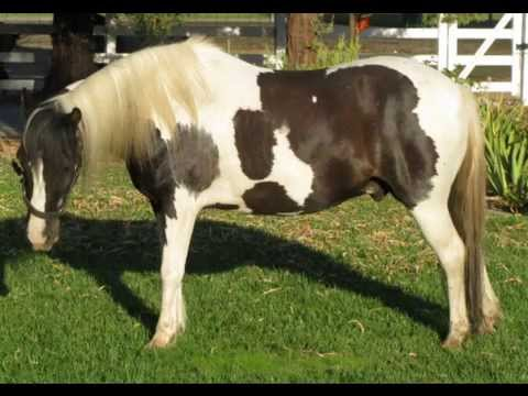 Ponies for Sale in California CA - Free Ads - HorseWeb