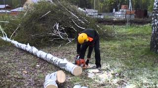 Вырубка Спил Деревьев Красноярск(, 2013-08-06T09:15:19.000Z)