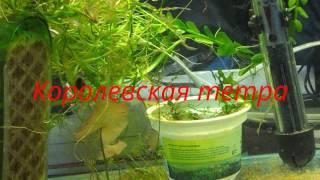 Аквариумные рыбки с названиями(видео)