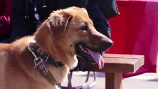 Ярмарка-раздача собак и щенков от пункта передержки бездомных животных
